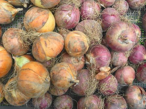 無農薬*ジャンボ・ニンニク500g&玉ねぎ/赤玉ねぎ計1kg