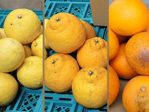 ☆和歌山産☆ お試し品!柑橘3種ミックス 5kg/八朔(訳あり)・はるか・三宝柑