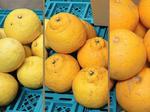 ☆和歌山産☆ お試し品!柑橘3種ミックス 5kg/八朔・はるか・三宝柑