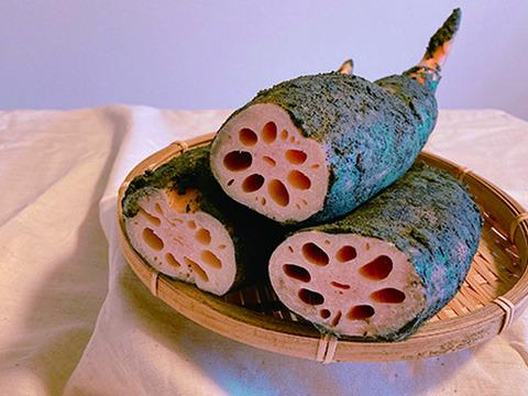 田島蓮園のもっちり甘い!昔ながらの鍬掘りレンコン 小さめサイズ/2kg【ご家庭用食べきりサイズ♫おすそ分けにも○】
