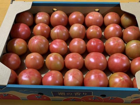 高糖度(塩トマト)『潮の香りトマト』3kg箱入り(H)