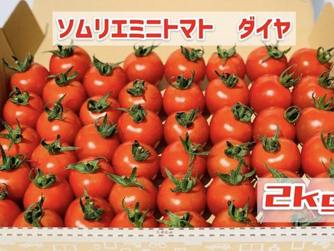 【塩トマトのようなフルーツトマト】ソムリエミニトマト ダイヤ2kg