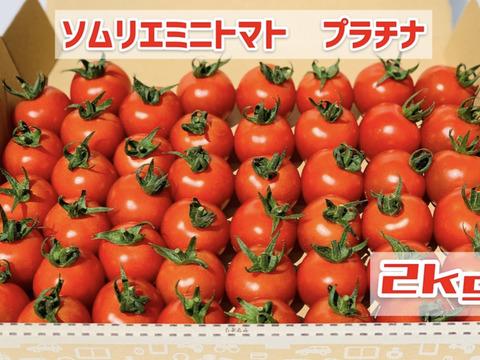 【希少な高濃度フルーツトマト】ソムリエミニトマト プラチナ2kg