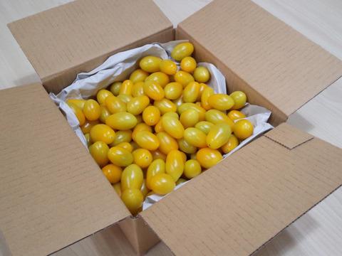 トマ糖*黄色のティポ*パクパク食べられるあまーいフルーツとまと1kgを南アルプス市よりお届け