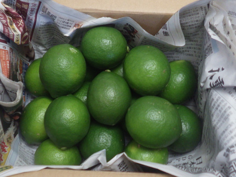 【今が旬】果汁たっぷり 青切り島レモン(マイヤーレモン)2kg
