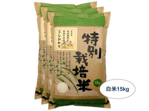 【白米15kg】信州産 農薬不使用米 こしひかり【受注精米】(5kg×3袋)令和2年産