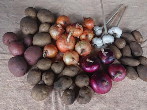 【初回限定】鳥取育ちの「北と南のジャガイモ食べ比べ」 玉葱・ニンニク入り