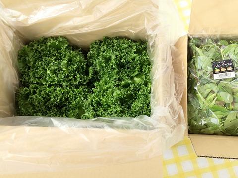 【バリューセット】1玉約300g!!の完全閉鎖型植物工場産フリルレタス(4玉)と朝獲りベビーリーフ300g×1のセット