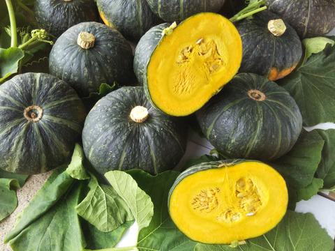 ほっくほくの甘々 【栗えびすかぼちゃ】 世界農業遺産ブランド野菜