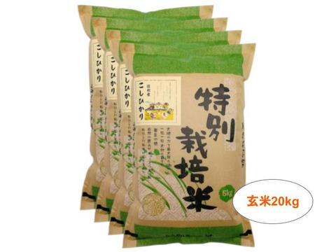 【玄米20kg】残留農薬ゼロ!情熱の結晶!つぶ感が人気の信州産こしひかり(5kg×4袋) 令和2年産