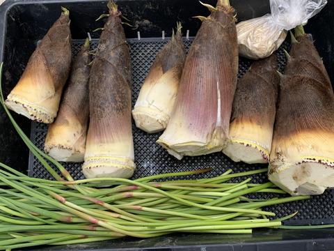 京都産 丹波タケノコ 採れたて柔らか 自然栽培(無農薬・無肥料・除草剤不使用) 筍とニンニクの芽