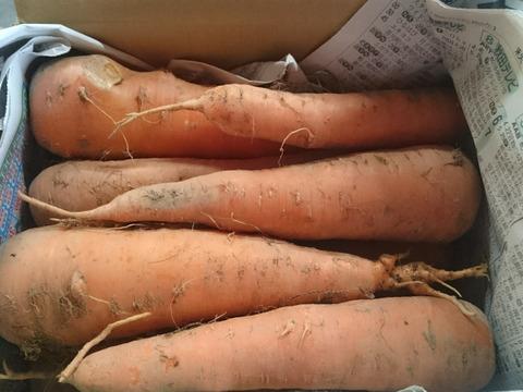 土付き黒田五寸人参 4.5kg 農薬化学肥料不使用
