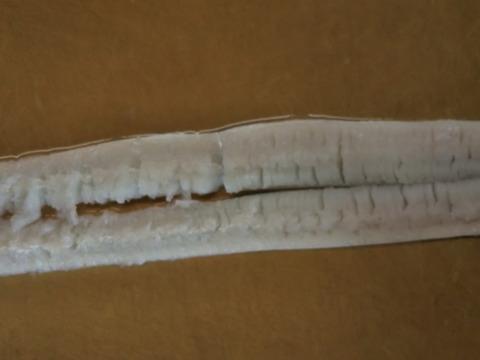 鱧骨切り900~1.1㌔×2匹