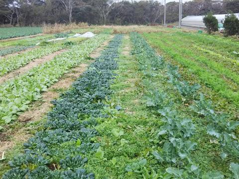 2箱分セット 毎日、草と共に、耕さない畑で22年 野菜(種とり、農薬肥料不使用)