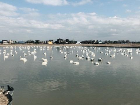【❗数量限定❗】ばぁばの玄米 自然栽培・コシヒカリ10㎏🍚✨✨✨✨✨白鳥が舞い降りる田んぼから 塩せんべいつき🍘