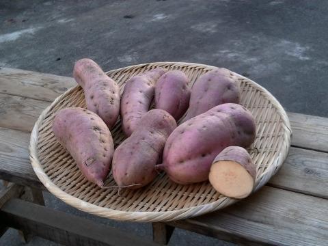 自然栽培さつまいも(安納芋)2kg
