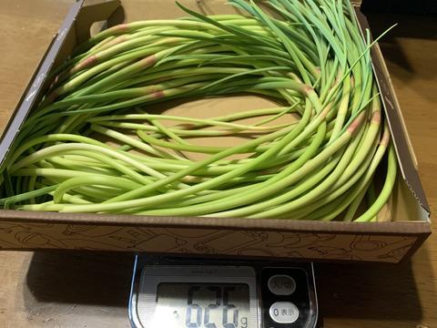 採れたて 自然栽培 にんにくの芽 650g 国産希少
