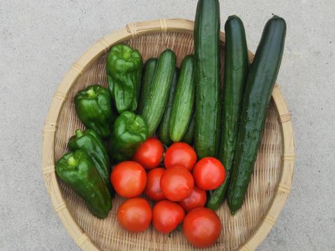 夏野菜増量の【ライトパック】 きゅうり・長ナス・フルーツトマト中心の限定増量パックです 田口農園イチオシ 世界農業遺産  ブランド認定野菜詰合せ