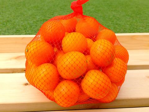 ❮キズあり❯3L(1kg)   ガブっと!苦味なしの金柑。贅沢フルーツハウスキンカン