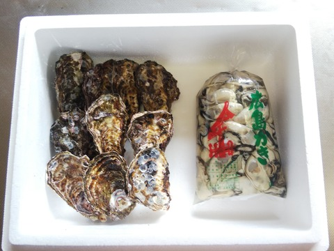 🌸春が旬🌸【加熱用】殻付き牡蠣10ヶ+【生食用】むき身1K袋(または500g×2袋)