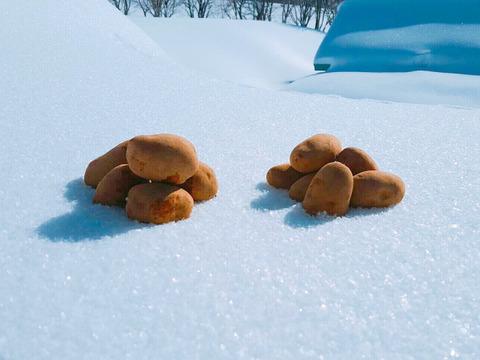 ほっこり幸せ!雪室じゃがいも〜4種の詰め合わせ〜(5kg)