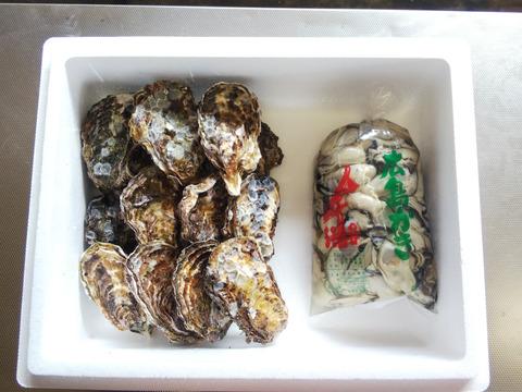 🌸春が旬🌸【加熱用】殻付き牡蠣15ヶ+【生食用】むき身1K袋(または500g×2袋)