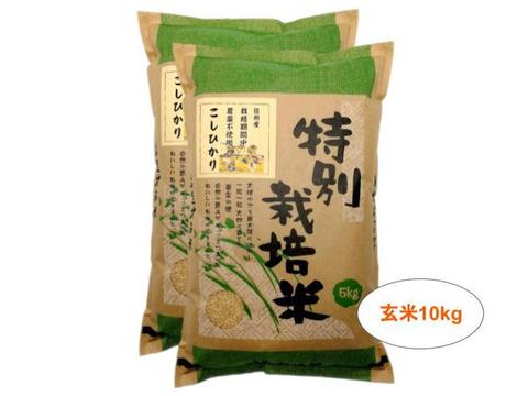 【玄米10kg】信州産 農薬不使用米 こしひかり (5kg×2袋) 令和2年産