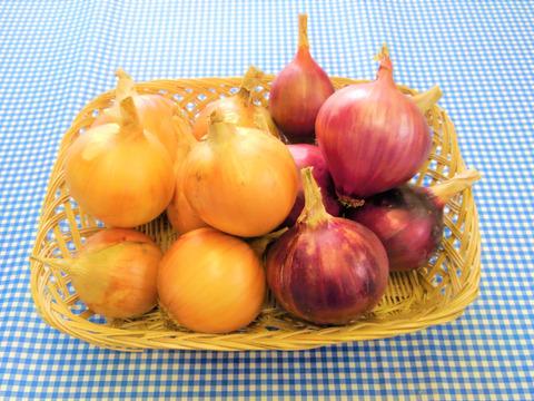 自然栽培♡黄・赤♡たまねぎセット:1kg
