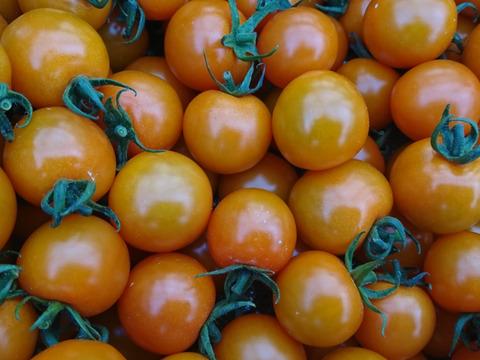 【600件突破に感謝を!】魔法の甘さ!完熟ツヤツヤ!ミニトマトのオレンジ千果(1kg)