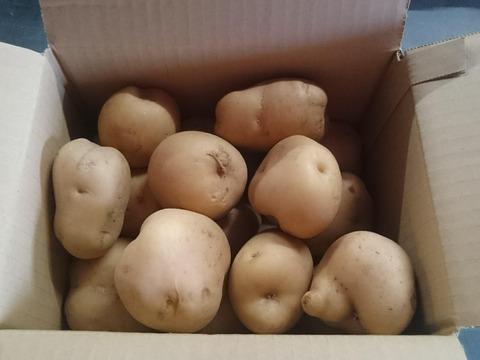 男爵(ミニサイズ)4.5kg 農薬化学肥料不使用