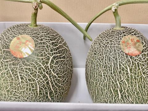 熊本県産‼︎肥後グリーンメロン2玉入り(約2.3kg×2)