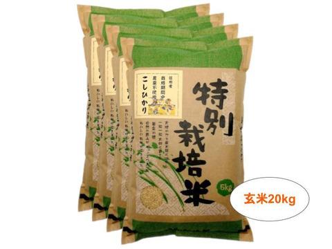 【玄米20kg】信州産 農薬不使用米 こしひかり (5kg×4袋) 令和2年産