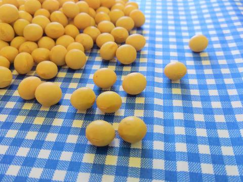 自然栽培♡黄大豆:500g