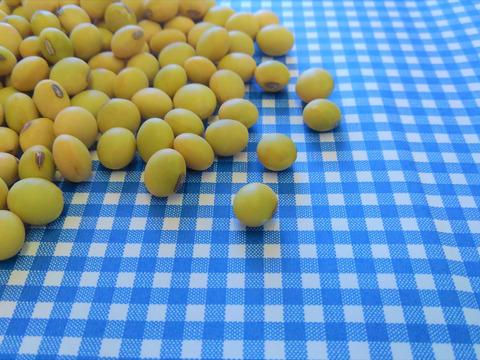 自然栽培♡青大豆:250g