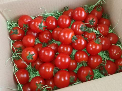 純粋・濃厚・安心!化学農薬・化学肥料不使用高糖度ミニトマト「レトロプリンセスA」1kg