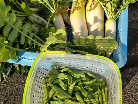 【期間·数量限定】大根がメインの初夏の野菜セット