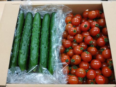 【期間限定】新鮮野菜セット!ミニトマト&キュウリ