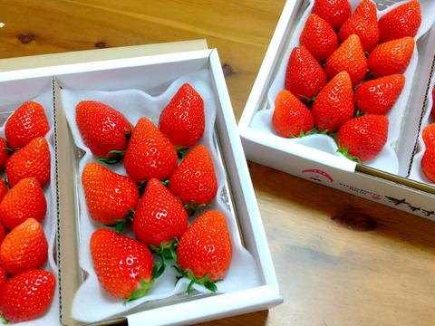 果汁たっぷり❗️【やよいひめ】群馬いちご320g×4p