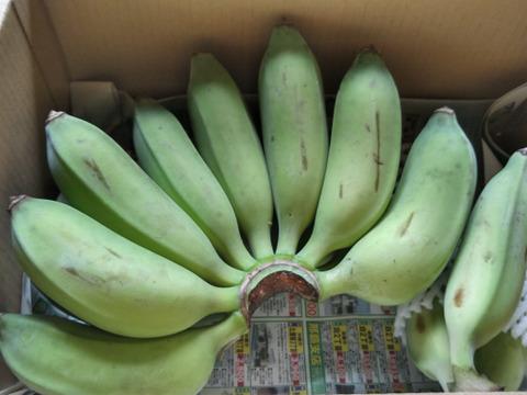 【味に自信あり!】もぅ普通のバナナに戻れない!?もちもちのアップルバナナ1kg(1~2房)