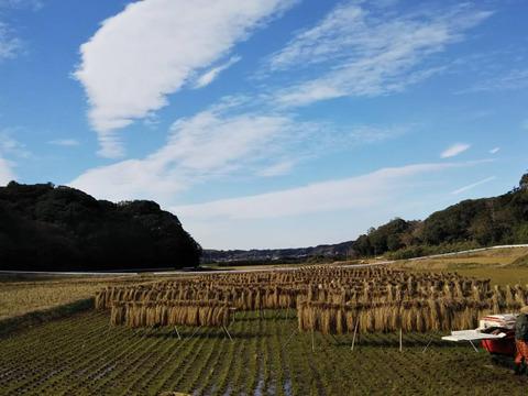 昭和のリバイバル玄米3キロ肥料農薬不使用おだがけ+春は転換期‼野菜4種~