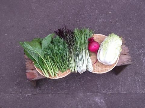自然栽培野菜お試しセット(5~6種類)
