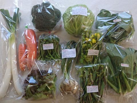 【規格外野菜利用】 オーガニック・しあわせ野菜・シェフセット  S