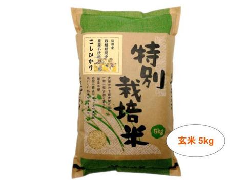 【玄米5kg】信州産 農薬不使用米 こしひかり 令和2年産