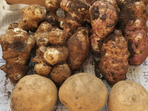 冬のお野菜いいとこ採り!【肥料・農薬不使用栽培】カラダに優しい冬の根菜セット(1kg)
