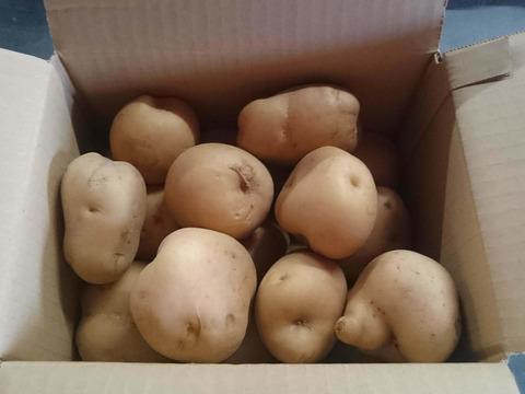 【コロナ対策買い置き応援】男爵(Lサイズ)4.5kg 農薬化学肥料不使用