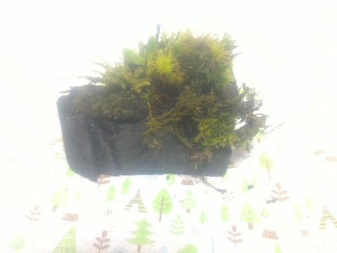 【侘び寂びを感じる1点物作品】【苔】【炭】【苔×炭】【内容量1ヶ】【観賞用 花・植物】