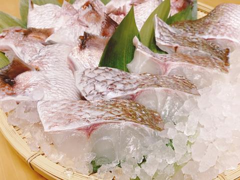 【お得なセット】「真鯛の切り身(5パック)」と「真鯛のカマ(5パック)」(養殖)急速凍結