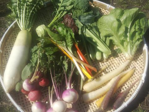 野菜セットMサイズ6~9種類セット(3〜4名暮らし用)