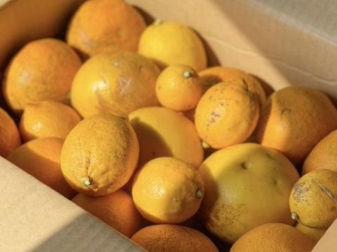 ブサイクなレモンと甘夏とグレープフルーツ詰め合せ4.5キロ