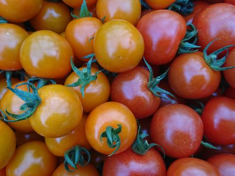 【600件突破に感謝を!】魔法の美味しさ!! 楽園トマトの定番 千果&オレンジ千果 1kg詰め合わせ